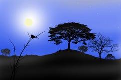 Lonely bird in full moon night Stock Image