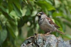 Lonely Bird Stock Image