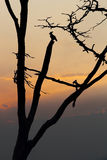 Lonely bird on leafless tree against of twilight Royalty Free Stock Photography