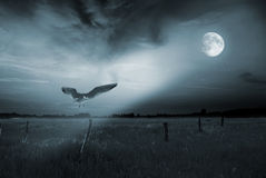 Lonely bird in moonlight Royalty Free Stock Photos