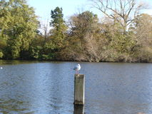 A lonely bird perching on a lonely pole Royalty Free Stock Images