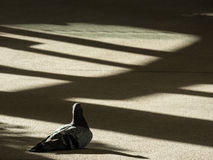 Bird Rests in Lights and Shadows royalty free stock images