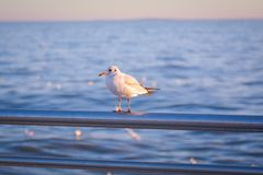 Lonely bird at the sea Royalty Free Stock Image