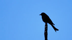 Lonely Bird Silhouette Stock Image