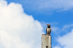 Lonely bird sitting on concrete pole Stock Photography