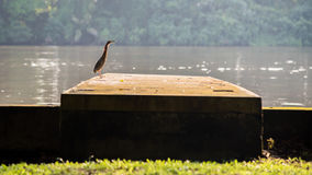 A lonely bird Royalty Free Stock Images
