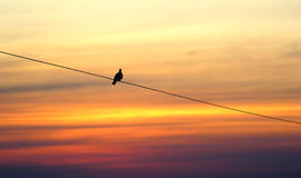 Lonely bird on sunset Royalty Free Stock Photos