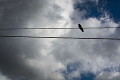 Lonely bird on telephone line. In Mallorca, Balearic islands, Spain in February royalty free stock photos