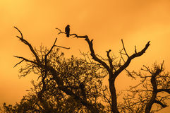 Lonely bird on tree Stock Photos