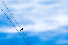 A lonely bird on the wire against a cloudy sky royalty free stock photo