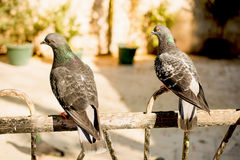 Lonely birds by live in urban environment Stock Photography
