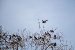 Lonely birds by live in urban environment Royalty Free Stock Image
