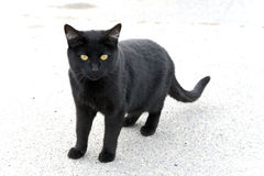 Lonely Black Cat. A black cat on an overexposed concrete background Stock Photo