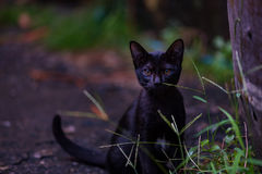 Lonely black cat Stock Image