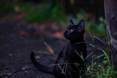 Lonely black cat. Close up of lonely homeless black cat sit and waitng for someone stock photos
