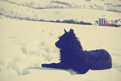 Lonely black dog lying in the snow in the mountains Royalty Free Stock Images