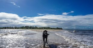 A black dog on the beach royalty free stock image