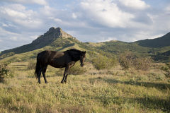 Lonely black horse Stock Images