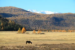 Lonely black horse on a pasture in mountains Royalty Free Stock Photo
