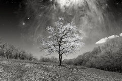 Lonely blossoming tree Royalty Free Stock Photography