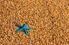 Lonely blue starfish Stock Photo