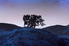 Lonely blue tree Stock Image