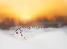 Lonely branch on a background of sunset sun Stock Photography
