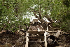 Lonely Broken Bridge. Lonely abandon broken wooden bridge among mangrove trees in Waisai, Raja Ampat, Papua Barat royalty free stock image
