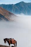 Lonely Brown Horse in front of mountains and blue Stock Photos