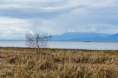 Lonely brown tree and dry grass on ocean shore cloudy sky Stock Photo
