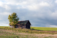 Lonely building. Lonely wooden building with a tree in the meadow Stock Images