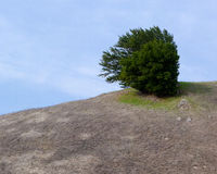 Lonely bush in barren landscape Royalty Free Stock Photos