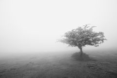 Lonely bush Royalty Free Stock Images