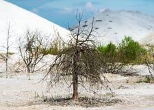 Lonely bush on contaminated land. Stock Photos