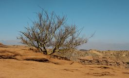 Lonely bush in the desert in Argentina stock photo