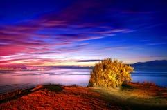 Lonely bush at night. On the coast of Sopelana royalty free stock image