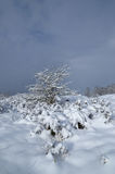 Lonely bush in the snow against the blue sky. Postcard views. Royalty Free Stock Photo
