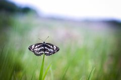 Lonely butterfly Royalty Free Stock Image