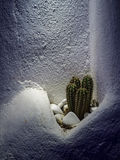 Lonely Cacti Royalty Free Stock Images