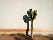 Lonely Cactus Stock Photography
