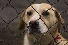 Lonely caged dog Stock Photos