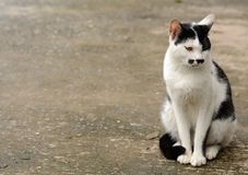 Lonely Cat Royalty Free Stock Images