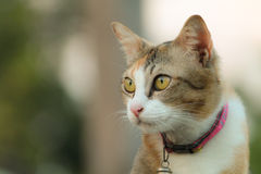 Lonely cat in blur background  Stock Images