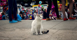 Lonely cat Royalty Free Stock Image
