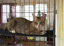 Lonely Cat in The Cage Royalty Free Stock Photos