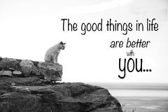 Lonely cat. Inspirational quote saying` the good things in life are better with you` with a lonely cat.  Picture in black and white Royalty Free Stock Photography