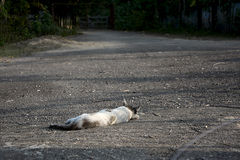 Lonely cat Stock Photos