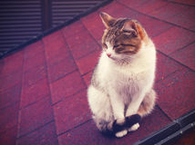 Lonely cat Stock Images
