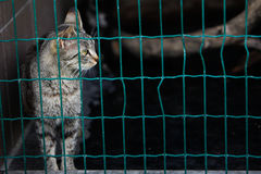Lonely cat in shelter Royalty Free Stock Photos