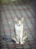 Lonely cat. The lonely cat sitting on the floor,soft focus royalty free stock photos